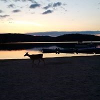 ottawa river evening deer