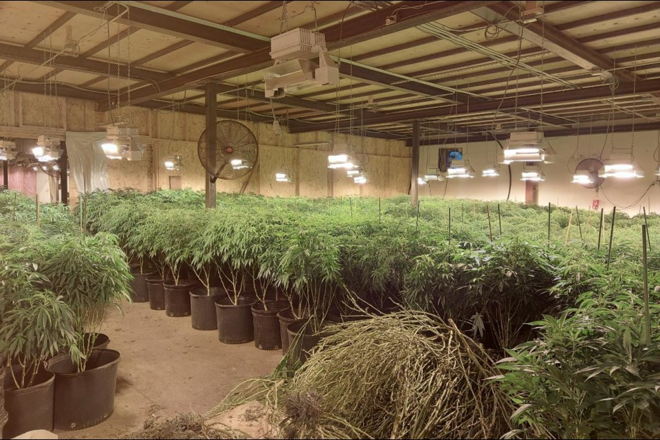 OPP arrested three Toronto area men after a drug bust at a grow-op near Burk's Falls.