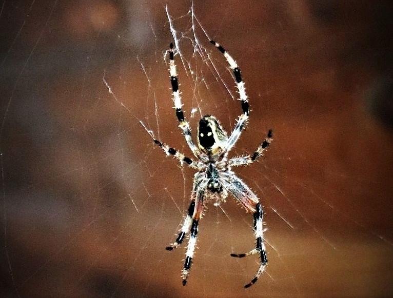 spider gazebo (2)