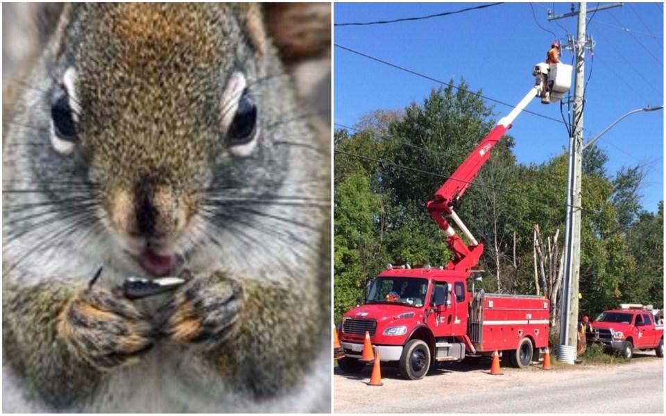 Hydro Squirrel