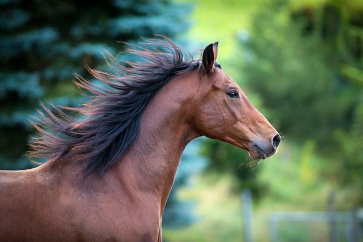 Horse-Alexia Khruscheva-iStock-Getty Images Plus