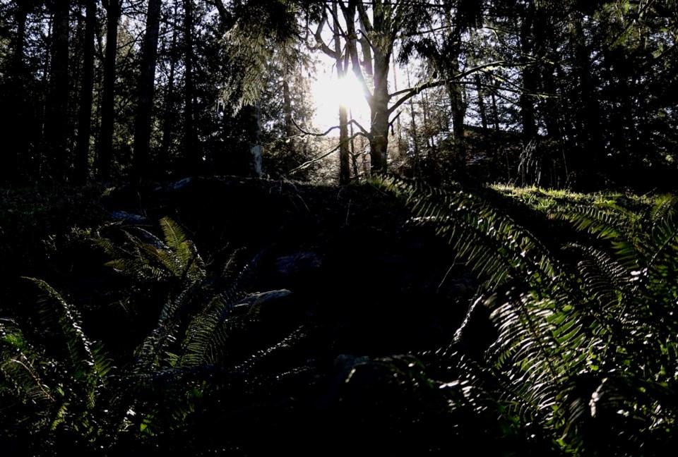 Sun shining through the Bowen trees in 2020