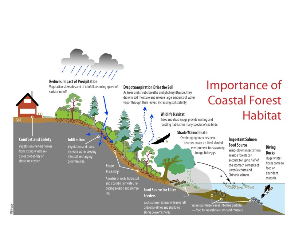 Importance of Coastal Forest Habitat