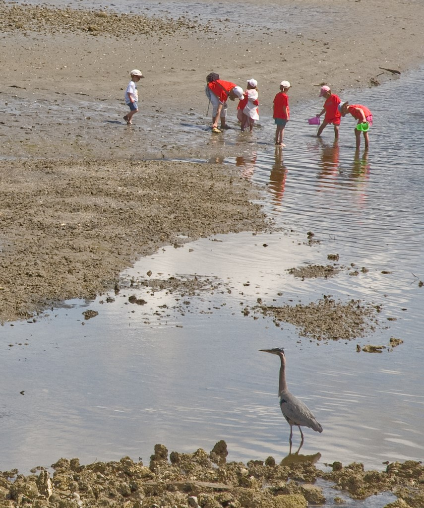 Kids playing on the beach with a heron in the foreground