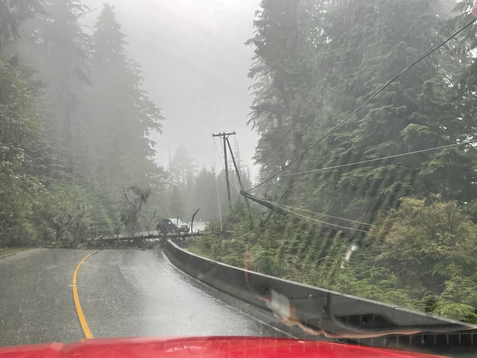 Tree down on a power line