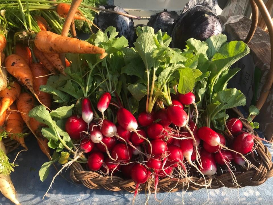 Veggies, some radishes, carrots, lettuce
