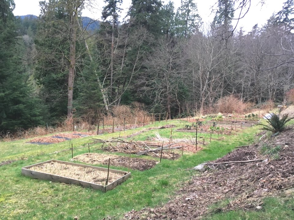 A series of winterized garden boxes in a field