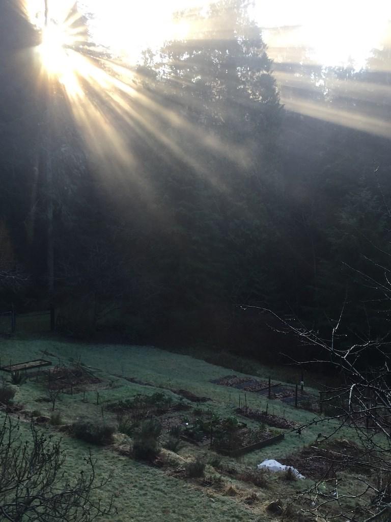 Rob Wynen's garden in winter with sunlight shining