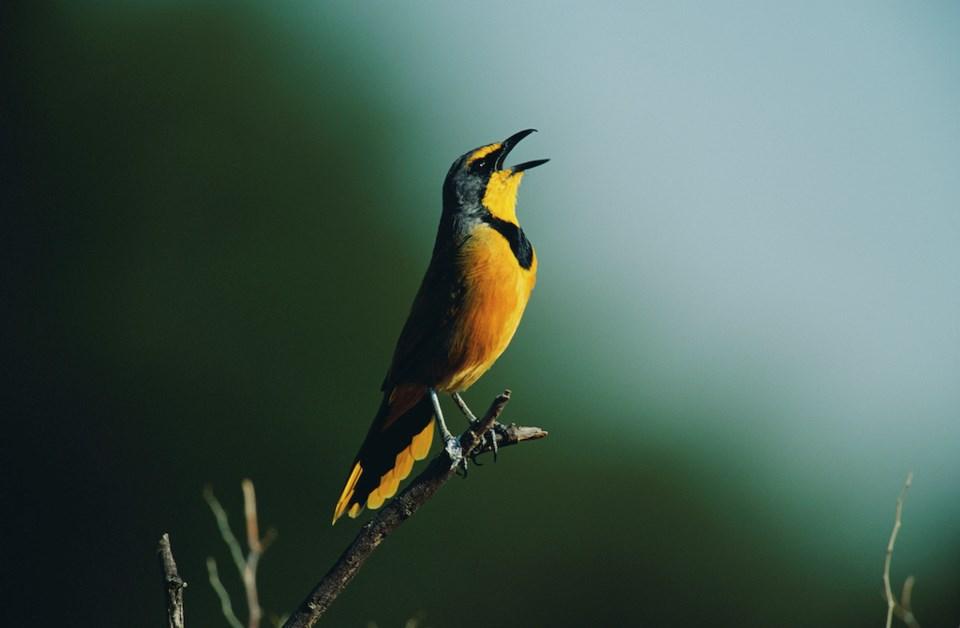 A bird in South Africa