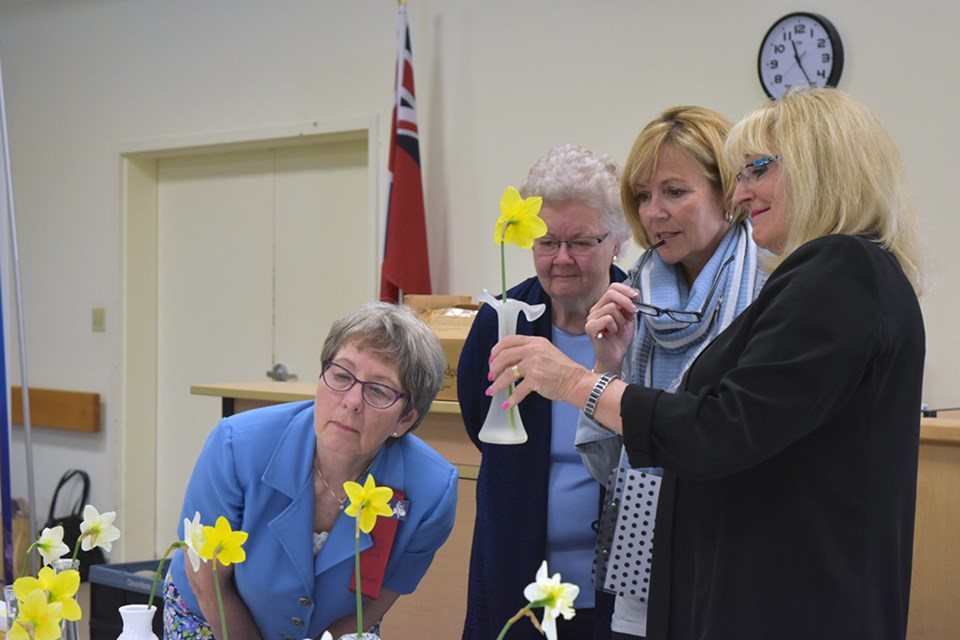 Judges examine the Narcissus entries in the Innisfil Garden Club's Spring Flower Show, May 11. Miriam King/Bradford Today
