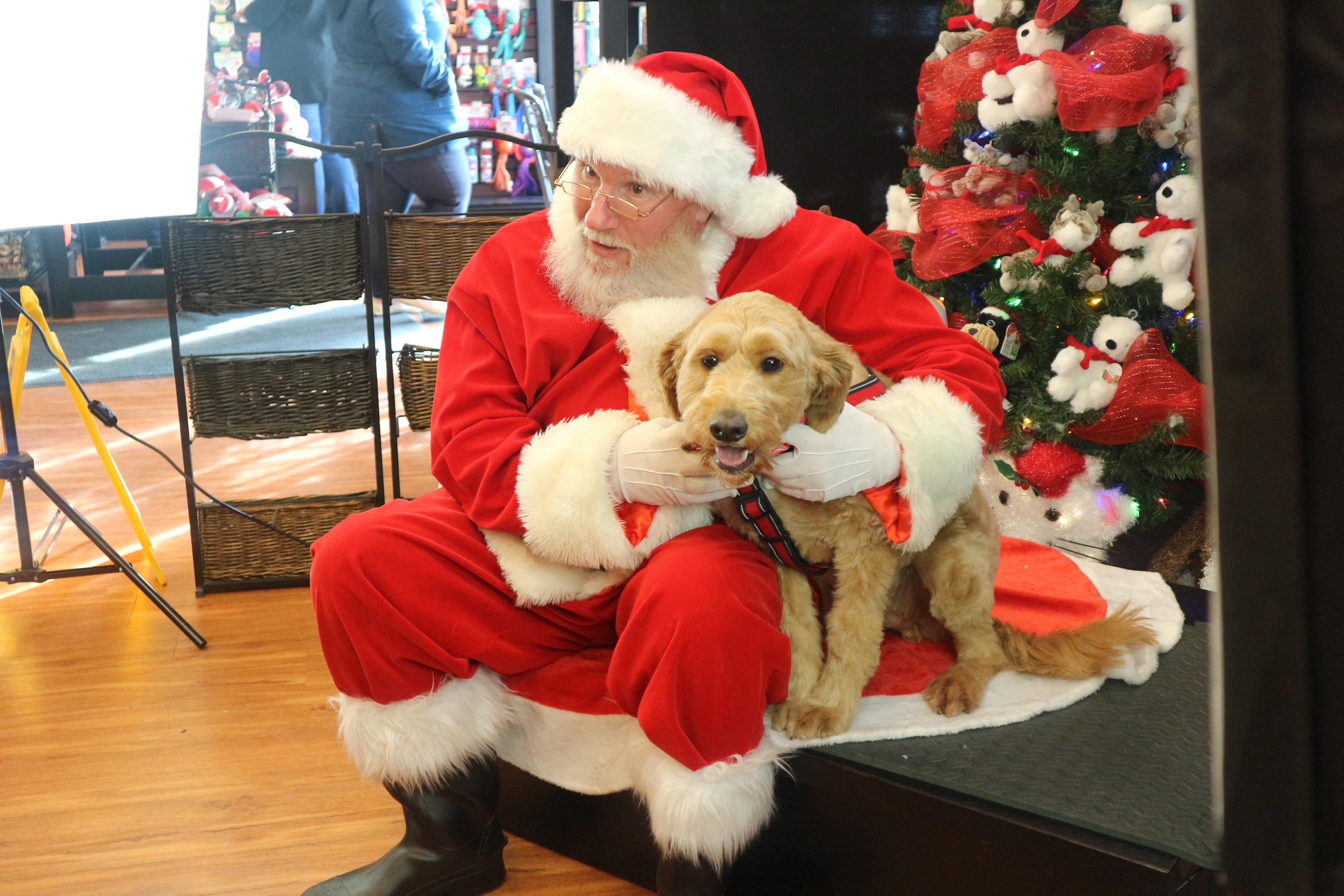 The joy of Christmas unleashed at Pet Valu\u0027s Santa photos (7