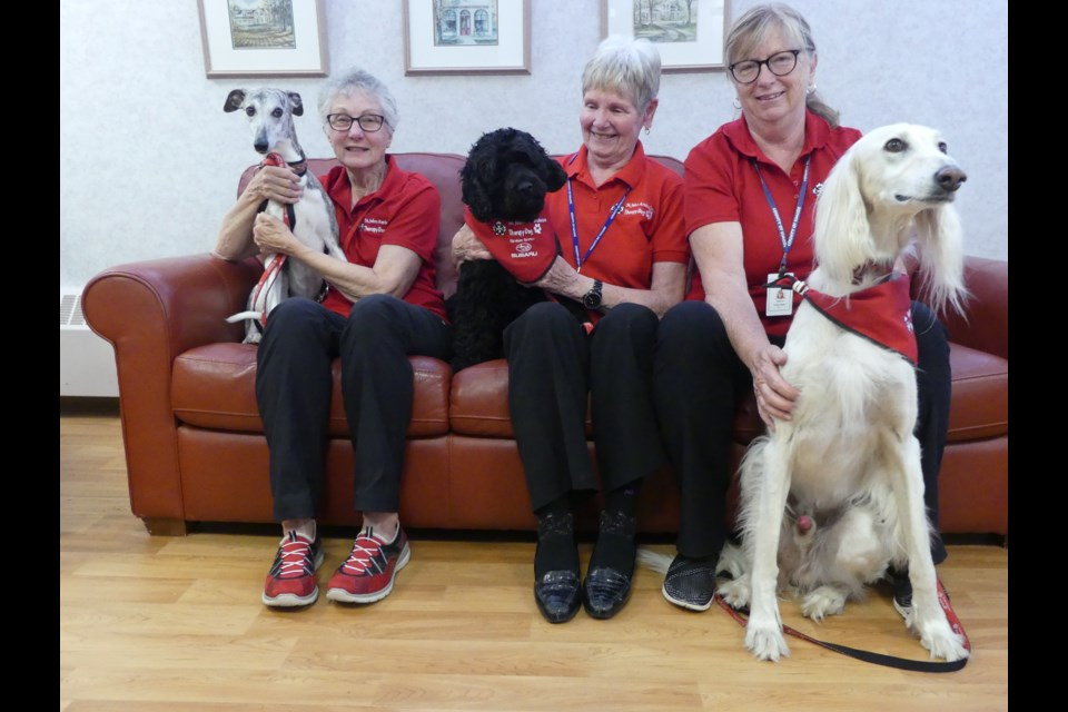 St. John Ambulance therapy dog volunteers: Kathy Fleming and Byron (from left), Barb Bottrell and Wilson, and Janice Preiss and Vinnie. Jenni Dunning/BradfordToday