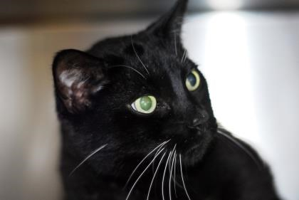 Dio is up for adoption at the Alliston & District Humane Society. Submitted photo
