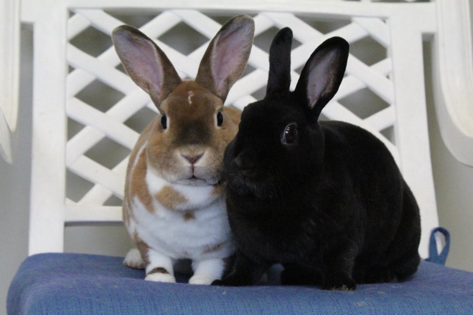 2018-08-10-adopt me bunnies