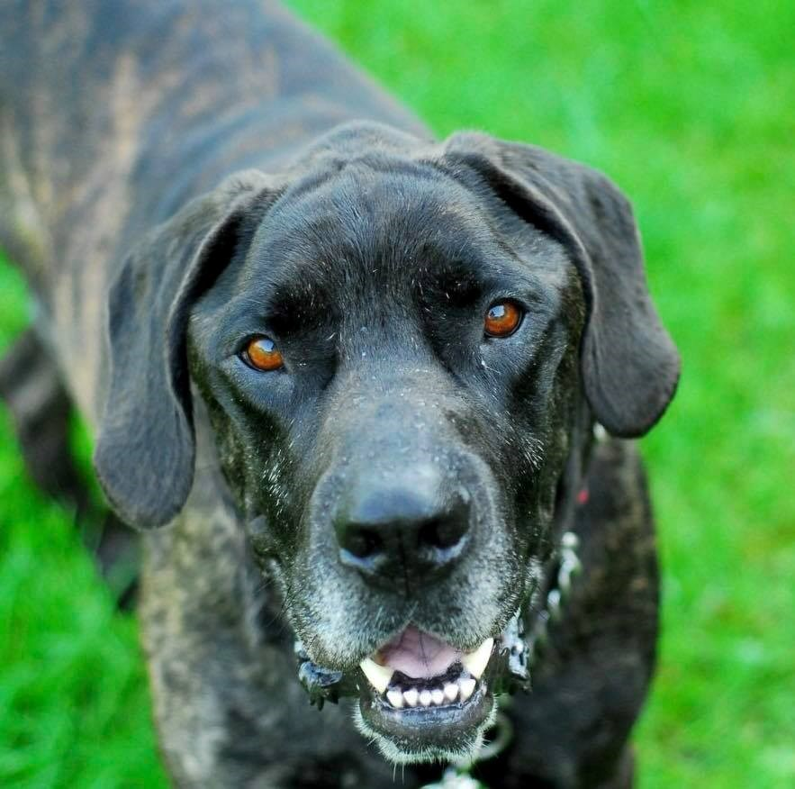Adopt Me: Ace Not Just A Good Boy