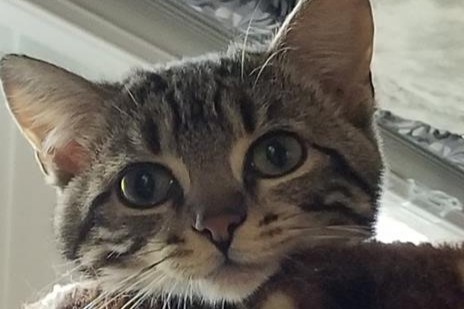 Olivia is up for adoption at the Alliston and District Humane Society. Submitted photo