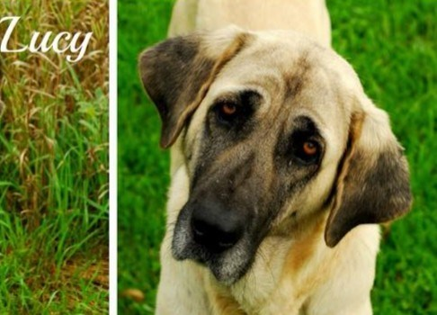Lucy is up for adoption at the Alliston & District Humane Society. Submitted photo