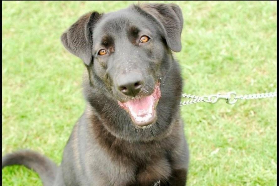 2019-06-04-adopt me dog Oreo