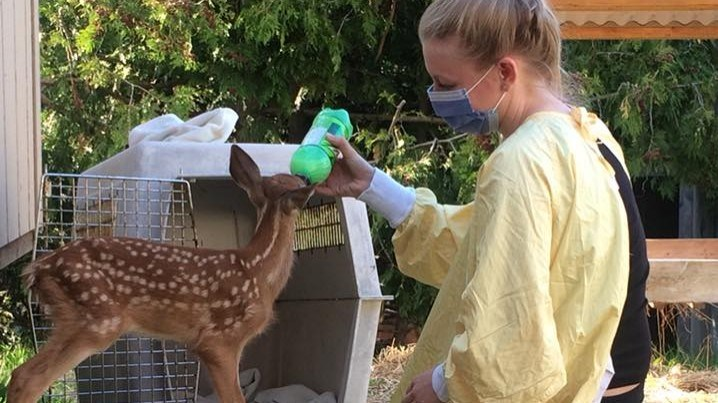 Procyon Wildlife is looking for volunteers for a number of jobs, including taking care of animals. Submitted photo