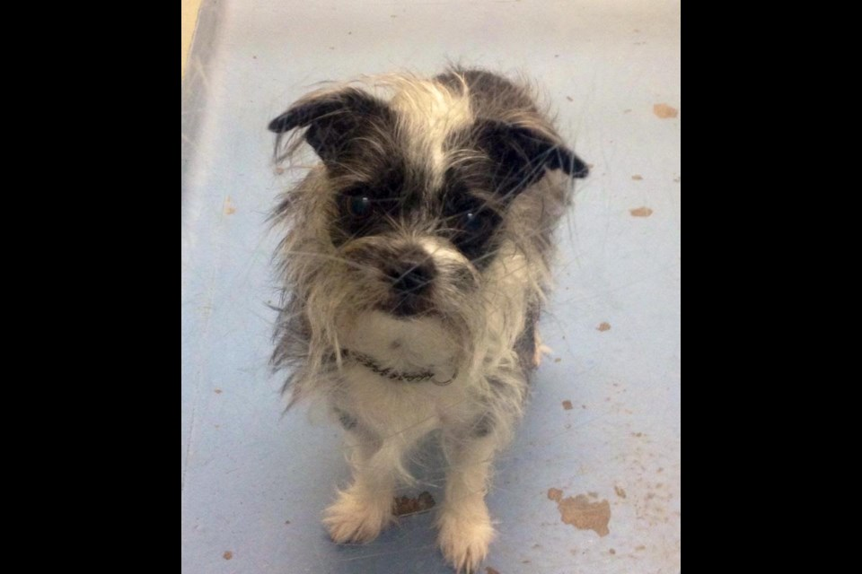 Lucky is up for adoption at the Alliston & District Humane Society. Submitted photo