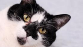 Moo is up for adoption at the Alliston and District Humane Society. Submitted photo