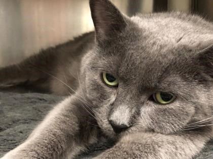 Mouse is up for adoption at the Alliston and District Humane Society. Submitted photo