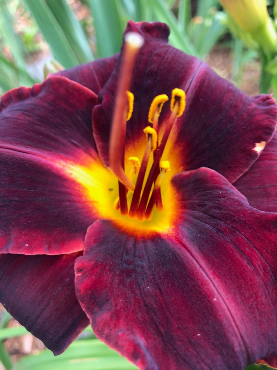 flower for cynthia column