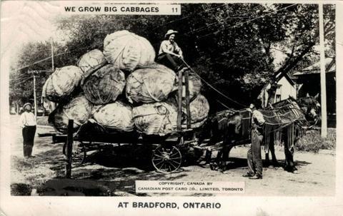 2019-07-17-bradford postcard cabbages