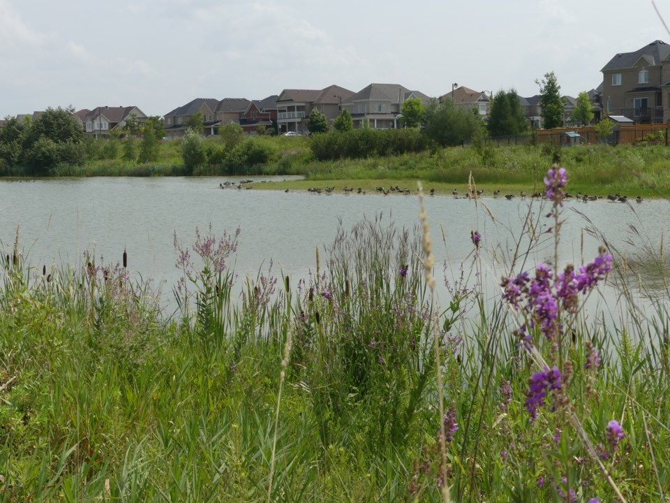 2018-08-15-stormwater pond