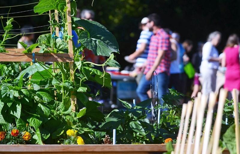 Community garden 2017-2