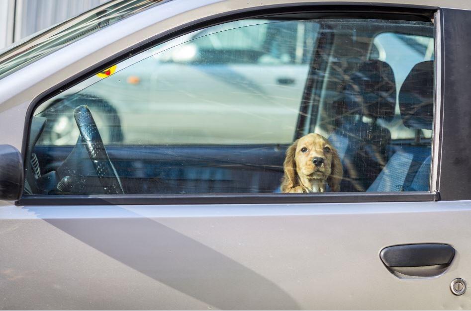 Dog1 Getty