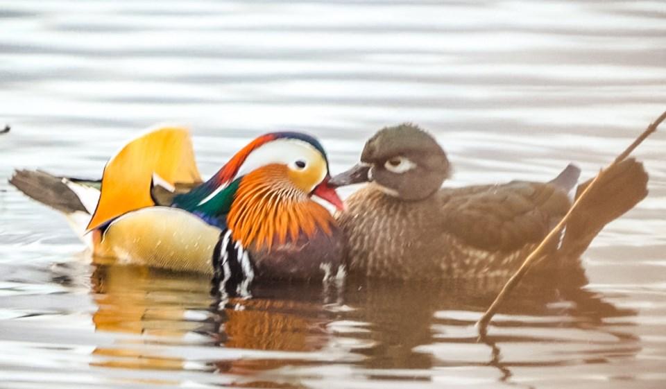 2021-01-03 Duck