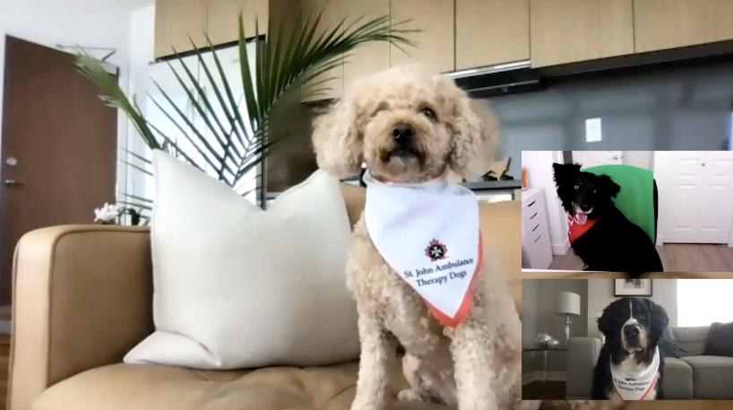 St. John's Ambulance virtual therapy dog