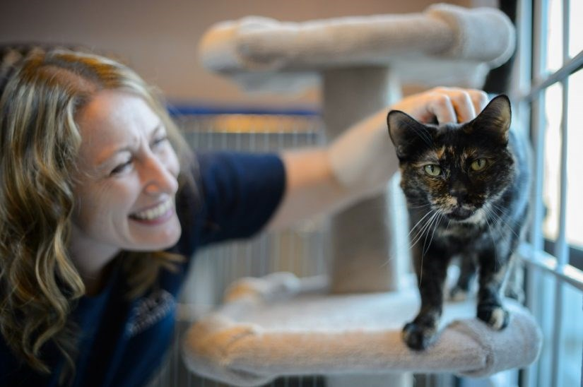 cat-half-price-adoption-825x548
