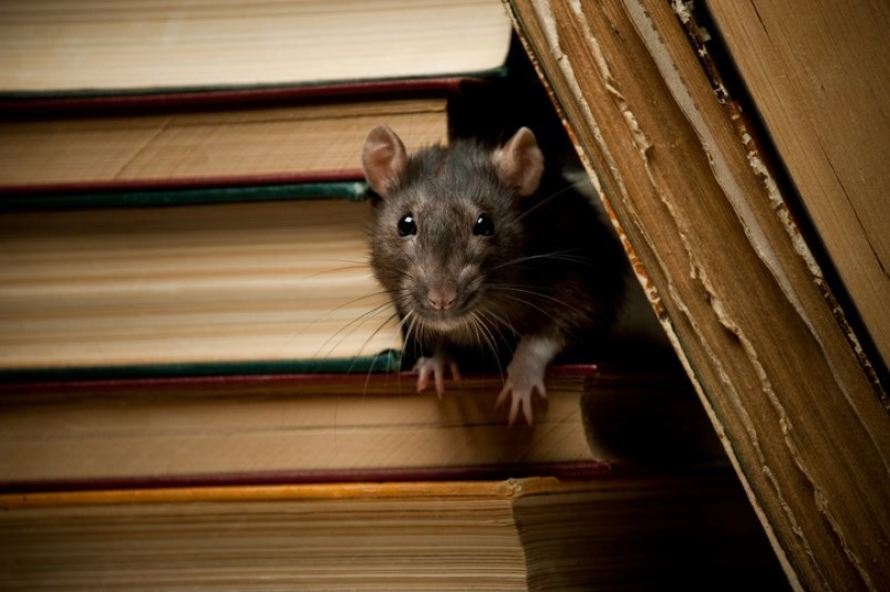 restaurants-dialling-back-their-business-or-closed-all-together-rats-could-be-migrating-to-you