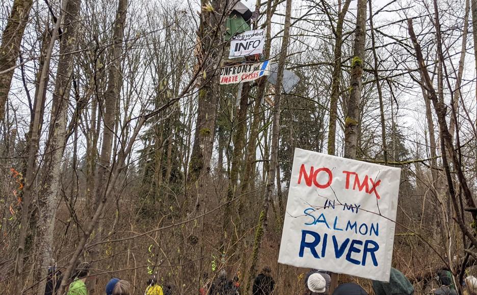 tmx trees trans mountain