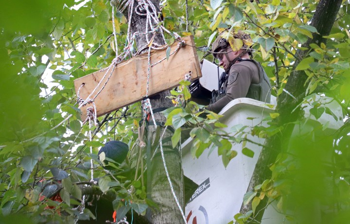 RCMP in Burnaby are using a lift bucket to reach Trans Mountain protesters in trees in Burnaby.