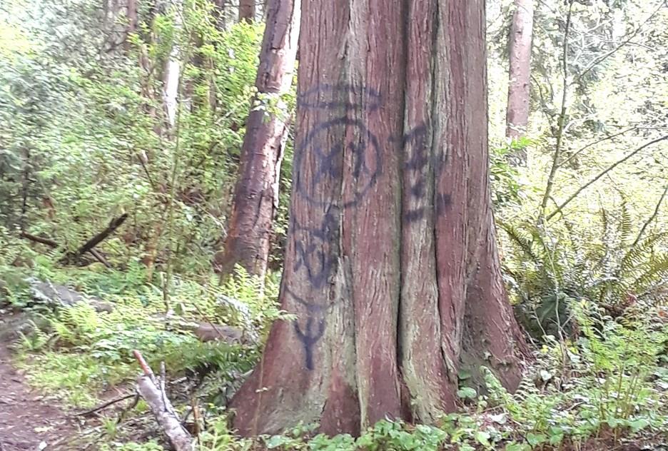 trees roberty