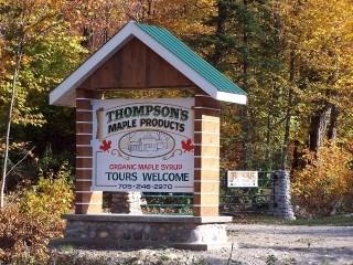 Thompson Maple1276123b