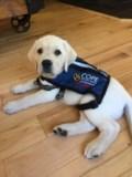 COPE Puppy in Training