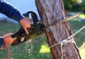 Tree-Removal-Tips