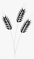 289-2896604_wheat-captain-clipart-ship-wheel-clip-art-transparent