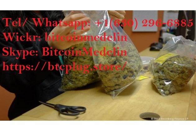 Buy Cannabis Caviar, Lemon haze, Sour diesel, OG kush Canada online at www.btcplug.store