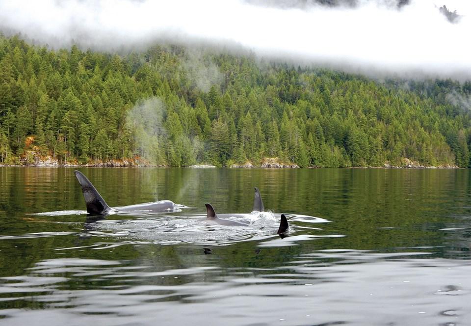 C.Whales