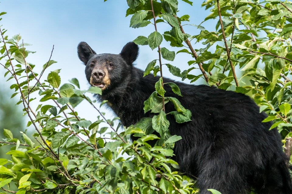 N.Bear aware