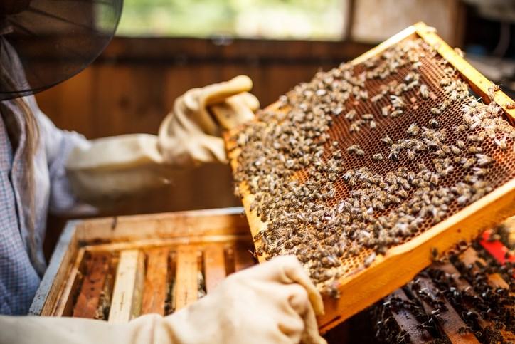 Getty-beekeepers