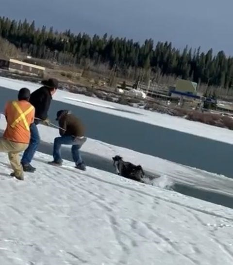 Rescuers work to free a trapped horse in the Bow River in Stoney Nakoda First Nation. SUBMITTED PHOTO