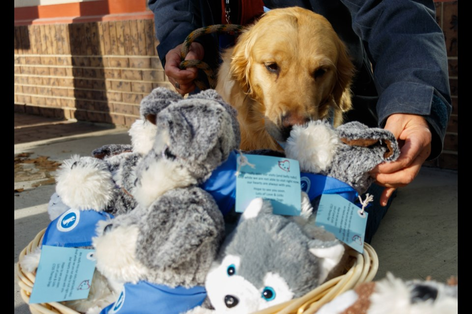 Community Therapy Dogs Society volunteers Chris Brealey, left, Prada and Lynn Giesler deliver stuffed dogs with messages of love for Bethany Cochrane residents to administrator Monica Johnson on Thursday (March 4). (Chelsea Kemp/The Cochrane Eagle)