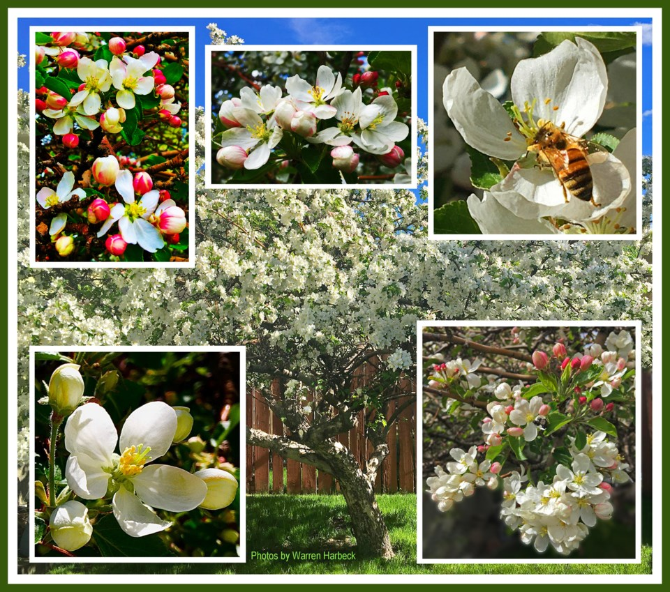 Collage-cww210603-appletree-B-e11-9hqesx8hq-frm