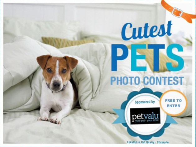 pet-contest-free-to-enter